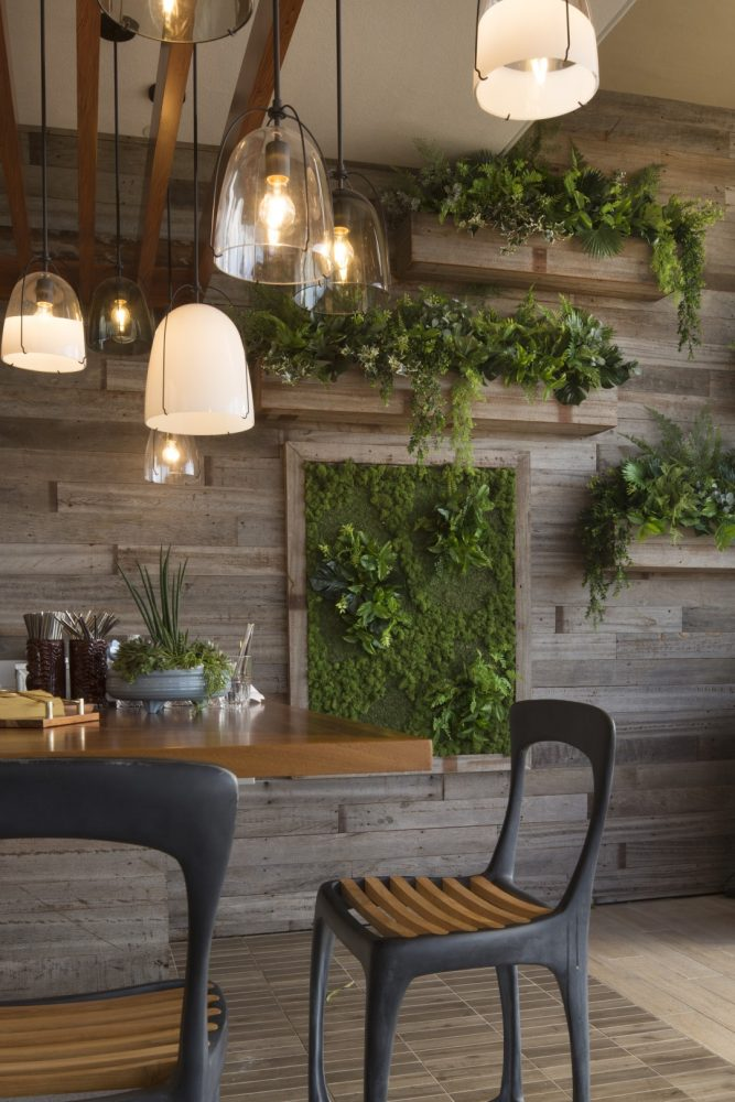 Queen Kapiolani Hotel Deck Restaurant Living Wall - Philpotts Interiors